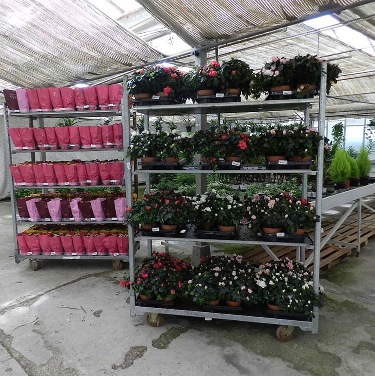 Ingrosso fiori recisi cagliari piante e accessori for Vendita piante da frutto sardegna